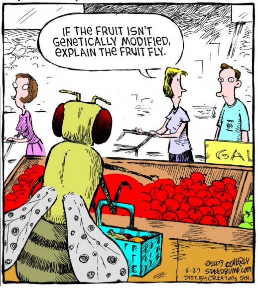 Fruit Fly GMO Cartoon