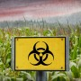 Where GMOs Went Wrong - and Why You Should Avoid Them