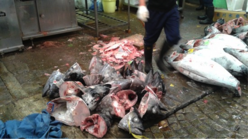 Remains of the bluefin tuna on auction at the fish market (mostly heads)