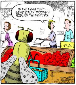 Fruit Fly GMO Cartoon