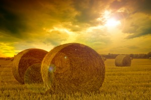 Cash-In on the Long-Term Trend in Farmland