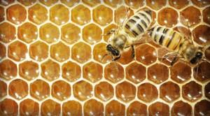 It's the Bee's Knees