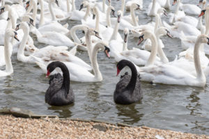 Cryptocurrency: The Blackest of Swans